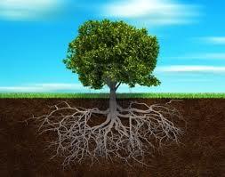 albero con radici